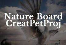 Nature / by Creative Pet Project