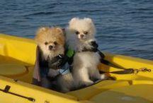 Skipper and Salty Dog