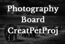 Photography / These are some of the animal photography found for the project. / by Creative Pet Project