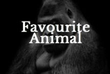 Favourite Animal / A pinboard to show us your favourite animal / by Creative Pet Project