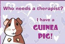 Guinea pig love / This board is all about sweet, cute, guinea pigs.  join the guinea pig group on facebook called GUINEA PIG LOVE https://www.facebook.com/groups/857980967596597/