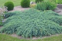 garden: plants
