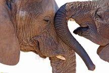 Elefanter / by Vilija Vestli
