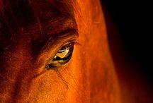 Horses / by Melinda McKinney