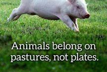 Animais e veganismo