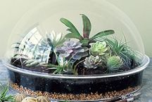 Terrarium / Isn't this fun? I am surely going to try to make one of these, finding the right plant and a place to house it might have have its problems, I am not known to have a green thumb either. / by Karina from Kalifornia