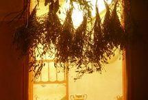 hierbas aromaticas / Solo se pueden pinear 2 pines No más!!!! Frescas o disecadas aromatizan y embellecen desde nuestro cuerpo hasta un plato...