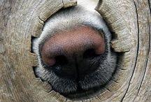 Pet/Dog *My love*