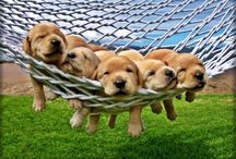 Precious Pups / by Charlene Miller