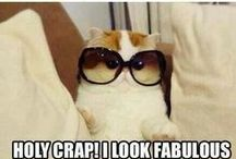 Cheer-Up Humour / Funny images from around the internet to bring a smile to your face.