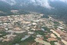 Destruction of Amazon through illegal mining.  / .