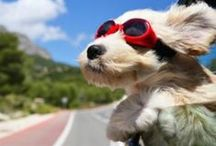 Pets and Traveling / We love our furry four-legged family members, and know that you do too. Learn how to bring the most horizontal family member traveling with ease, and get your daily fill of cute while you're at it!