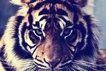 Søde dyr <3