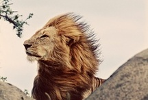 Animals / They are strong, beautiful, smart and brave. An example to us all.