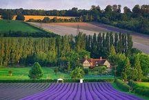 French Countryside / F R E N C H    C O U N T R Y S I D E / by Elizabeth Morneault