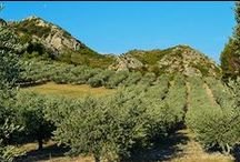 Un peu de Provence