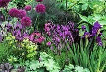 Gardens / by Elizabeth Morneault