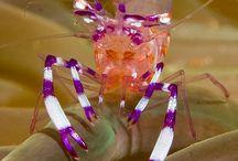 Dive Shrimp & Crab pics