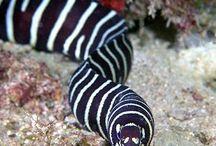 Dive Eel Pics