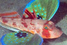 Dive Fish Pics
