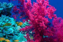 Dive Coral & Anemone Pics