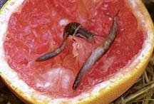 Eco Tips - Pest Control