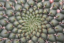 cactuSuculnt. / by Blue.b¡rD