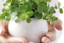 Eco Tips - Healthy Home