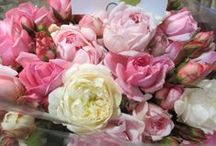 Camberwell Market Florist / For flower lovers