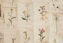 Herbarium / inspirationboard