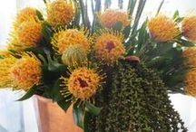 Corporate Flowers / Injecting colour, texture and creating a powerful vibe for public spaces.