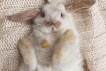 LAPINOU / Parce que j'aime les petits lapins passion partagée avec mes enfants