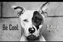 Animals looking for a home/Tiere suchen ein Zuhause / Geben Sie einem Tier einen Platz, wo es bleiben kann und geliebt wird. Give a home to a homeless animal where it can stay and feel loved.