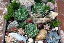 garden, minigardens, succulents