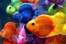 Color, color...