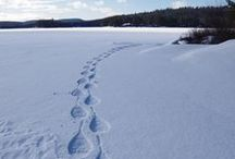Winter / A look at Winter Activities in Ontario Parks