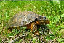 Wildlife / A glimpse at wildife found in Ontario Parks.