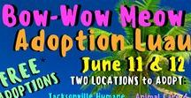 Dog & Cat Adoption Promos / At JHS, we LOVE to showcase our dogs and cats using fun, themed adoption promotions. These are a few of our past promos and our favorites from other shelters. Enjoy!