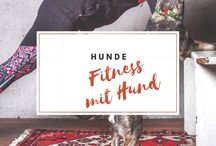 Hunde | Fitness mit Hund