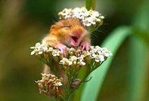 Dyr som kan få deg til å smile / Noen ganger er det hyggelig å bare kunne le litt. Her har vi prøvd å samle morsomme bilder av ulike dyr. Have fun!
