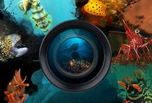 UW Photography Competitions / Here are some of the underwater photography competitions you can find all over the world.