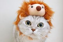 Adorable animals / I love animals, the natural therapy!!!
