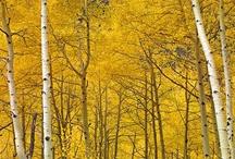 Natural Spectrum: Yellow