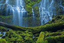 Natural Spectrum: Green