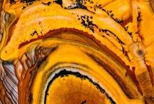 """Nature""""s Texture: Orange"""