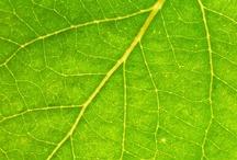 Subtle Detail: in green
