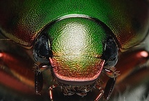 Coleoptera: in green