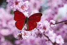 Delicate Wings: red