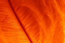 Feathers: in orange