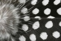 Feathers: in black & white